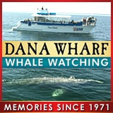 DanaWharf3.jpg